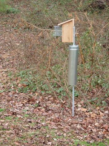 Bluebird Box along Path
